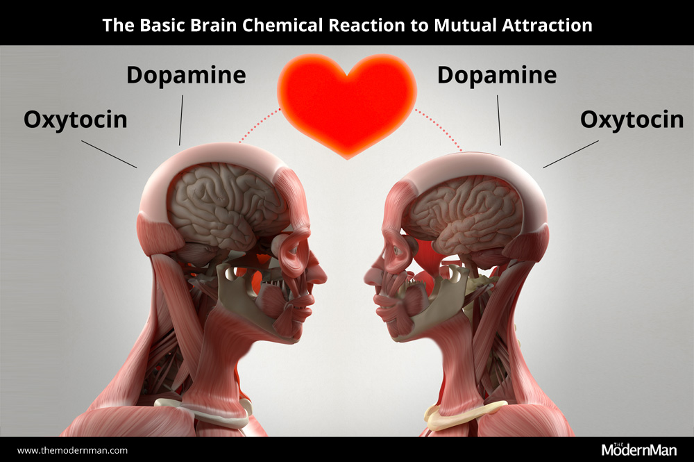 The basic brain chemical reaction to mutual attraction