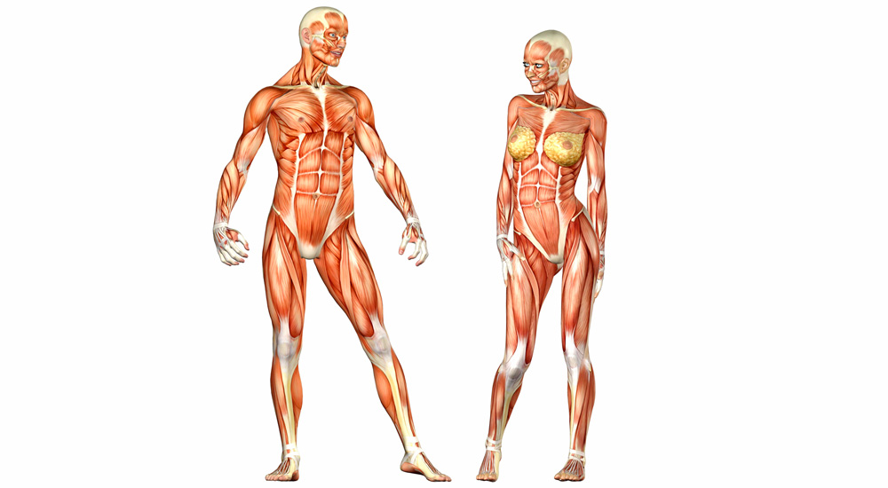 Male and female bodies are very similar