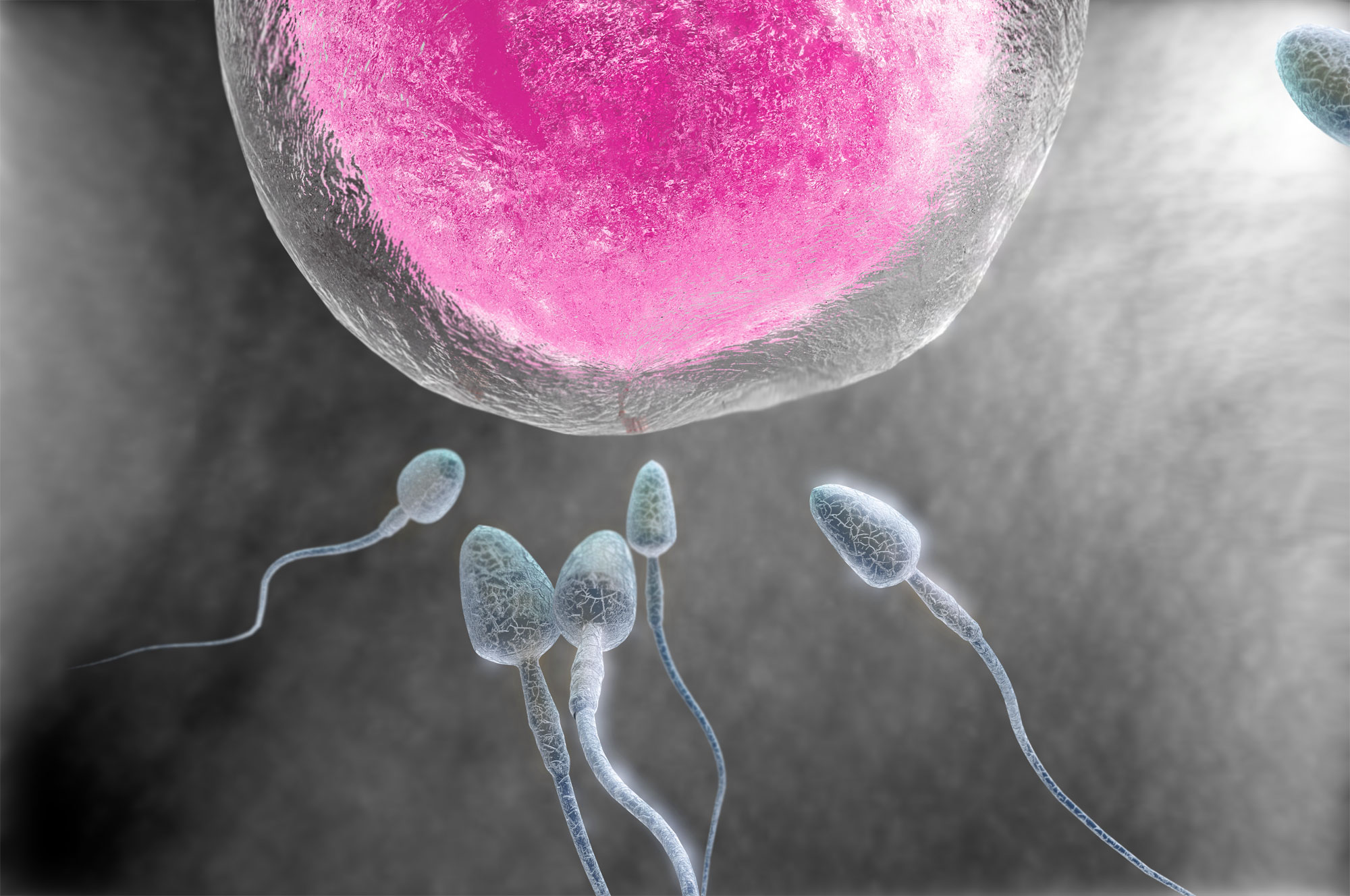 An illustration of a man's sperm about to fertilize a woman's egg